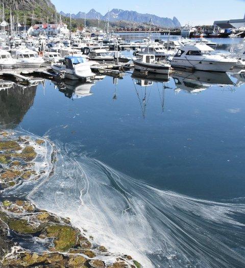INGEN AVVIK: TILGRISET: Statsforvalteren  i Nordland fant ingen avvik hos Saga Fisk AS