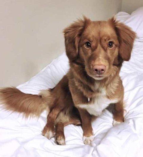SAVNET: Hunden «Olivia» forsvant i grensetraktene mellom Nord-Odal og Eidsvoll søndag.