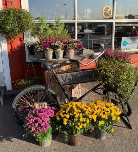 Ble stjålet: Denne pyntesykkelen og noen planter ble stjålet fra utegården utenfor Heggtoppen blomster i løpet av helga. Mandag ettermiddag ble sykkelen funnet henslengt bak en container.