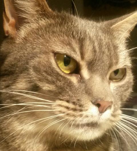 Molly er savnet.