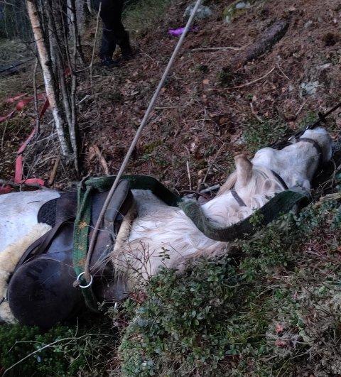 Berget: Hesten var sterkt preget etter å ha bakset i myra i over to timer.
