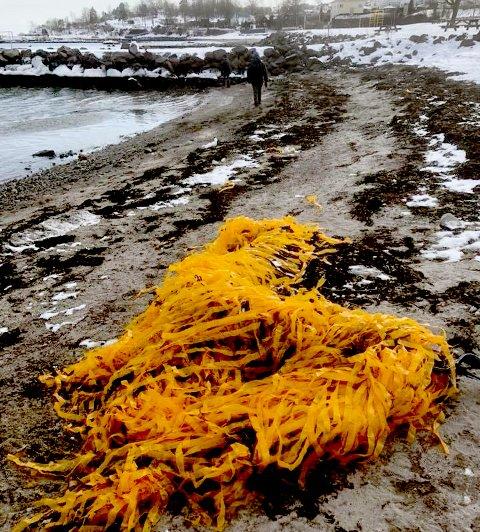 PLAST I: Dynger med oransje plastremser har skylt i land i vinter.