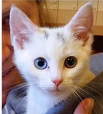 BLE FUNNET: Denne kattungen ble funnet på julaften på Bakke. Den ble trolig dumpet sammen med en annen kattunge som ble funnet død noen dager senere.