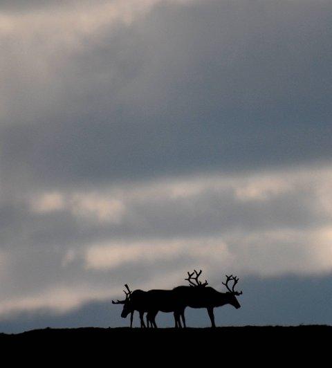 Odda og Ullensvang fjellstyre melder om høg fellingsprosent i år.