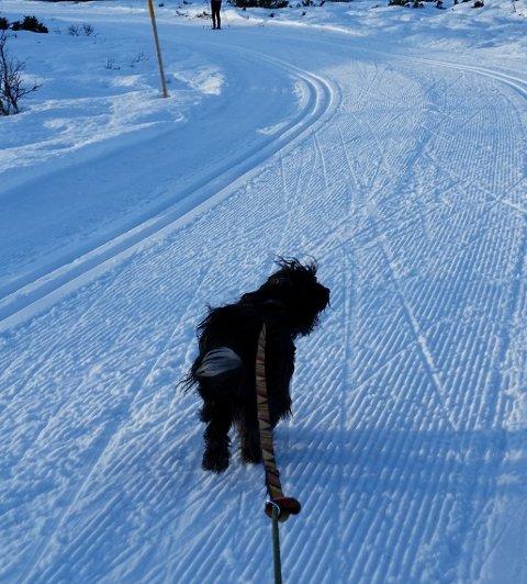 Bandtvang: Øystre Slidre og Nord-Aurdal har innført ekstraordinær bandtvang for å verne hjorteviltet.Arkivfoto: Svein Erik Ski