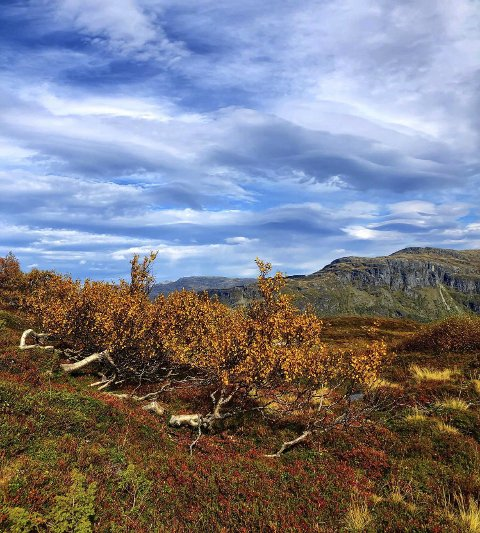 HØST: Høst i fjellet skrev Randi Mørk da hun sendte inn dette fine bildet. Foto: Randi Mørk