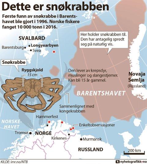 Første funn av snøkrabbe i Barentshavet ble gjort i 1996. Norske fiskere fanget 10 000 tonn i 2016.