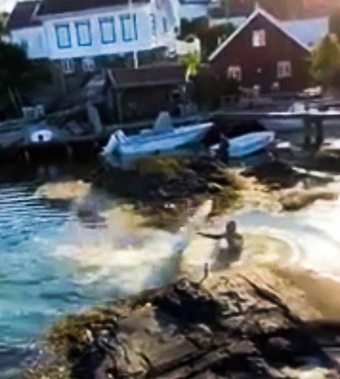 Svanen var ikke fornøyd med å få badebesøk på Teineholmen.