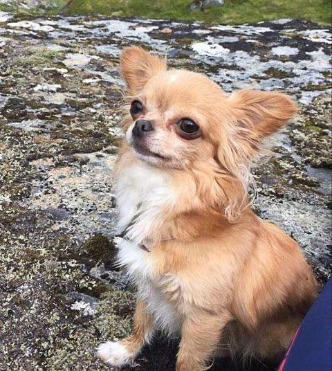 TATT AV ØRN: Søndag formiddag ble hunden Bella tatt av ørn uten for sitt hjem.