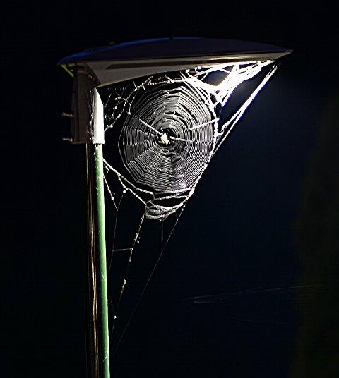 GATELYSFELLE: Per Olav Berg har fanget et spesielt stort edderkoppnett med sitt fotoapparat. Et av naturens underverk.