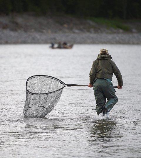 SESONGKVOTE: Fra kommende laksesesong innføres det sesongkvoter i Namsenvassdraget, som åpner for at hver fisker kan ta inntil 12 lakser i løpet av sommeren.