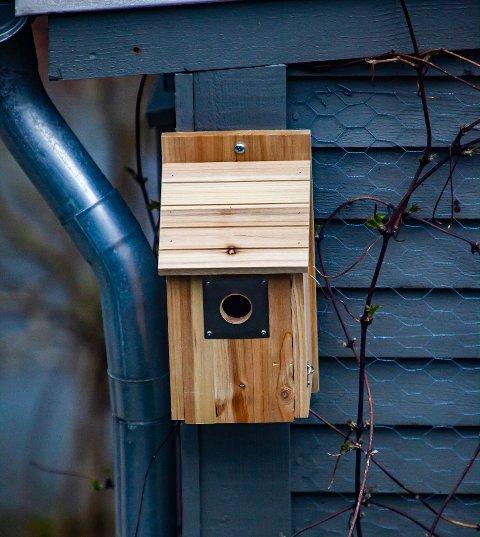 Olav Moberg fikk ny fuglekasse i år. I mange år har meisen lagt reir i fuglekassen utenfor huset. Men i år var det ingen å se.