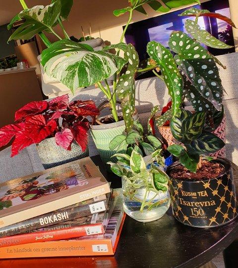 På biblioteket har vi flotte bøker om både inneplanter, hageplanter, og andre som har med planter å gjøre.