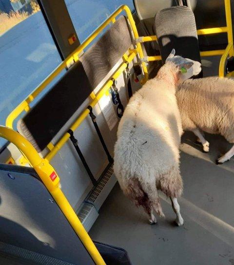 STEG PÅ: Disse to tenkte at bussen var et fint framkomstmiddel.