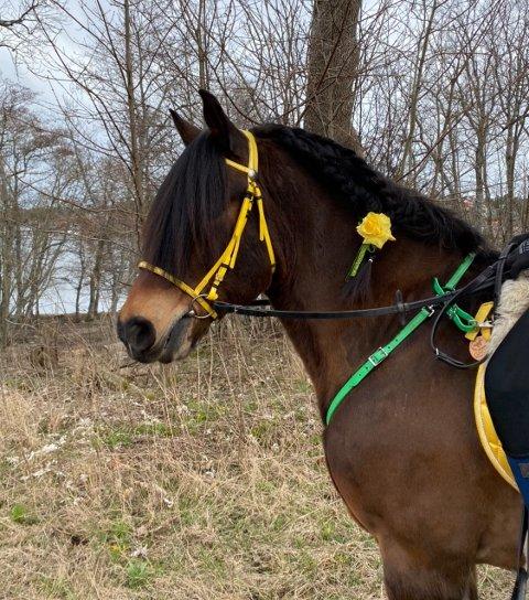 ULING: Hesten Harry fikk mange til å lure, men ble selv «lurt».