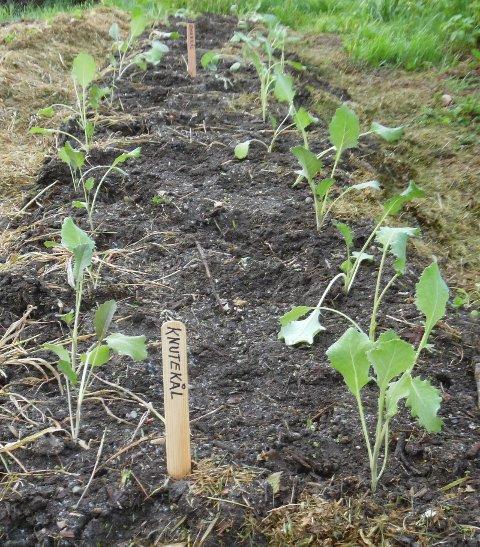 Ønsker at flere prøver å dyrke litt mat for å lære seg hva som skal til.