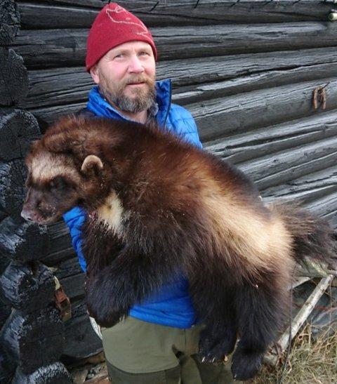SJELDEN GJEST PÅ REVEÅTE: Georg Sole, Garmo, med den 9,5 kilo jervetispa han skjøt i Kleppdalen i Lom.