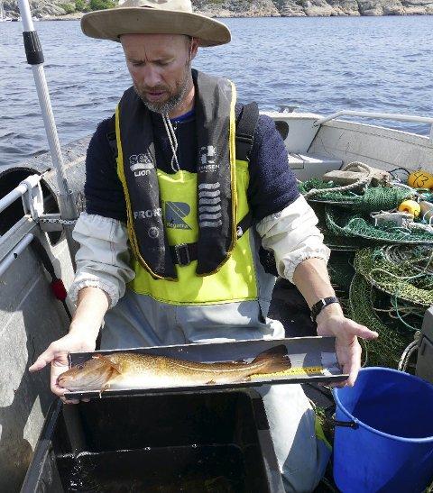Feltarbeid: Forsker Even Moland registrerer større og eldre torsk etter fiskeforbudet. Foto: Havforskningsinstituttet