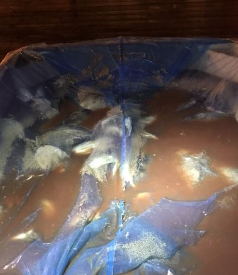 BLODVANN: Hauene lå i kar fylt med blodvann.
