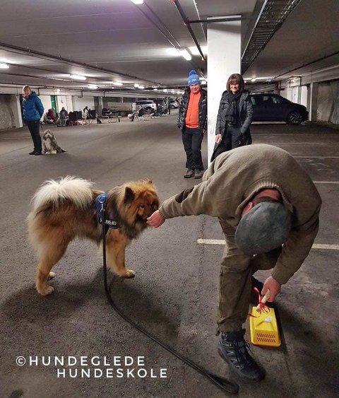 FJORÅRETS FEIRING: For fjerde året på rad kan hunder feire nyttårsaften i Apenes parkeringshus.