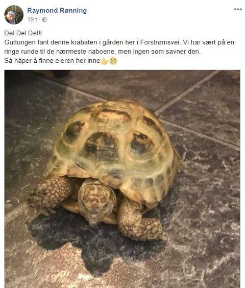 ETTERLYSNING: Pappa Raymond Rønning håper han finner eieren til skilpadda via Facebook og HA. – Jeg trodde sønnen min tulla da han sa at han hadde funnet en skilpadde i gården, innrømmer han.