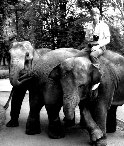 SNABLA BRA: Gjengangerens reporter, Svend Aage Madsen, lånte tre elefanter av Cirkus Arnardo og dro på badetur til Vollane - med politiets velsignelse.