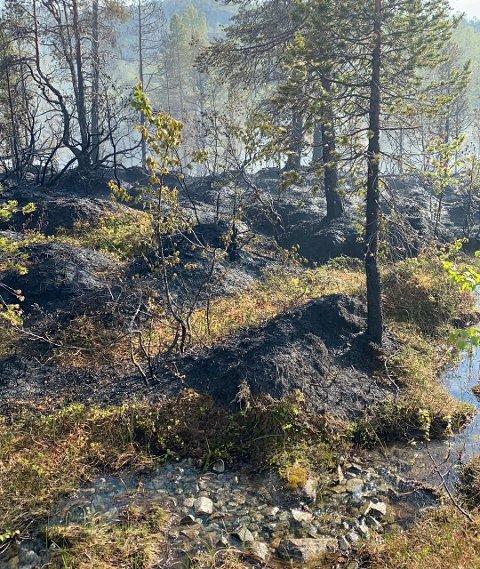 SKOGBRANN: Et bilde fra den nedbrente skogen i Fugldalen, mellom Jøvik og Lakselvbukt i Troms.