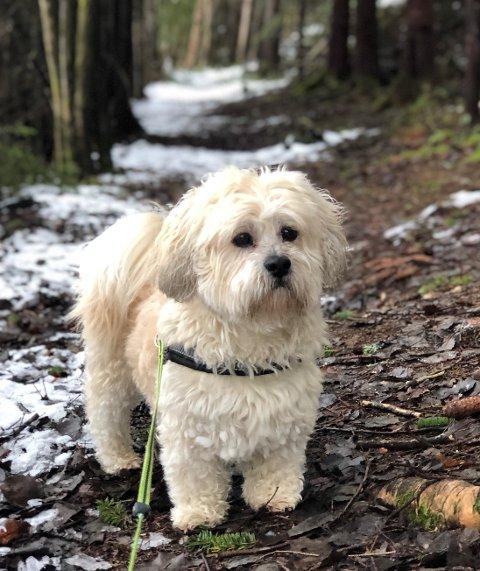 PÅ KENNEL: Teddy er på kennel, nå er det inngitt stevning til Nedre Telemark tingrett for en rettslig prøving.