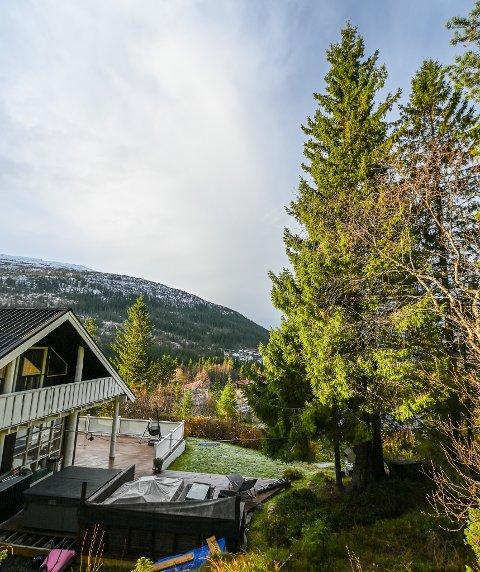 Katta til Bjørn Pedersen sitter i toppen av et 15 meter høyt grantre i Åga og kommer seg ikke ned.