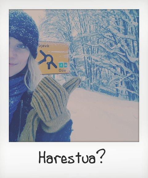 Tingelstad- Harestua unnagjort på fem timer!