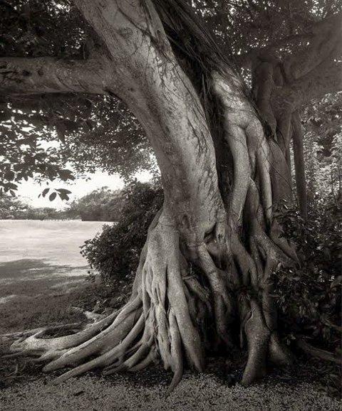 Naturlig Nærhet: Utsnitt av foto av Erik Jansen.  Foto: Hole Art Center