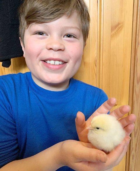 KOS: Birk Nyheim synes kyllingene er myke og deilige å stryke på.
