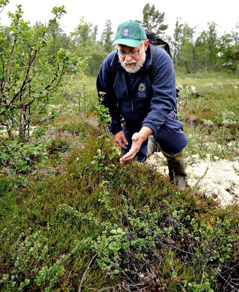TELLER: Lars Inge Enerstvedt i Statens naturoppsyn (SNO) er en av dem som hjelper til med å sette opp ferdselstellere på Hardangervidda. Her leter han etter bjørnespor ved en annen anledning.