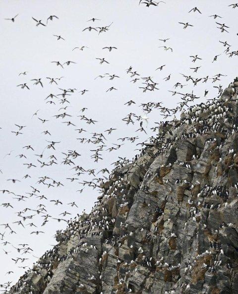 SKAL FILMES: Første filmteam kommer allerede 4. juli, og da skal de dokumentere fuglelivet fra sjøen og under vann.foto: biotope