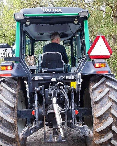 Motorgal: Denne katten elsker biler og motordur. Best har han det når han får sitte på med traktoren når Ole Morten Nilsen skal ut og kjøre.