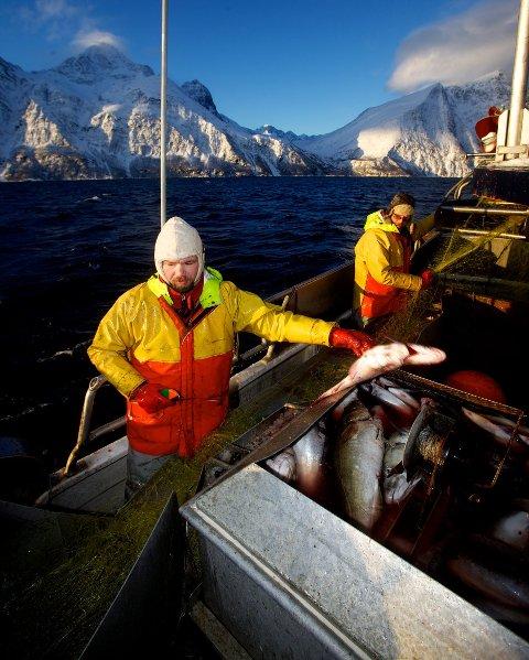 REAGERER: Tom Vegar Kiil på fiske i Lyngenfjorden sammen med Henning Adamsen. Kiil er leder av Norges Kystfiskarlag, og kommunestyremedlem i Nordreisa.