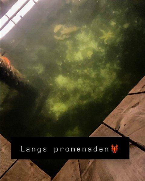 """HELE VEIEN TIL PROMENADEN: Denne hummeren ble sett gjennom vinduet på """"kikke-punktet"""" på den nye promenaden i Flekkefjord."""