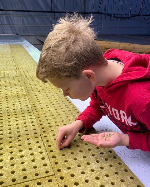 Yngste generasjon Skarstad, Lars-Mathias, sår tomatfrø i romjula. Det må til om vi forbrukere skal få kjøpt tomater fra gården til 1. mai.
