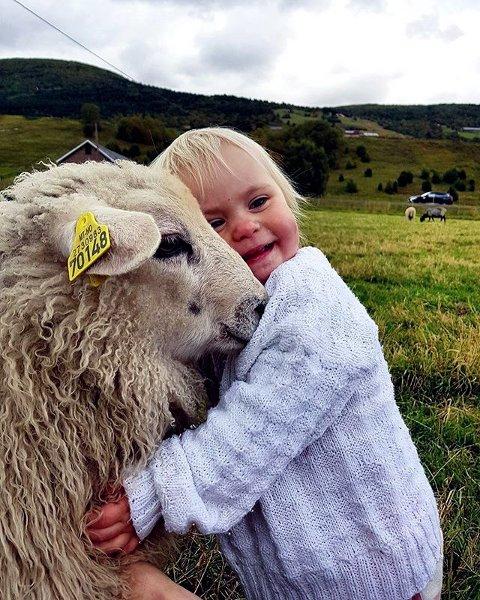 GODE VENNER: Lille Victoria som æ sååå glad i dyr. En saue-kos slår aldri feil. #gdbilder #høst #kopplam #dyrevenn. Foto: Ann Helen Holum