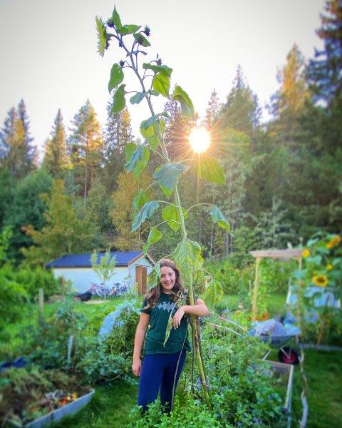 HØY: Irma Kvamme-Madsen (10) måler 1,60 meter over bakken, mens solsikken er nærmest dobbelt så høy som henne med 3,25 meter.