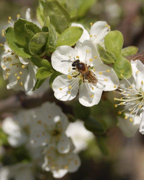 Marit Helgerud sendte dette blomsterbildet til vårfotokonkurransen vår.