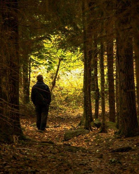 Skogstur:  Ann Kristin Hynne Green har fanget høsten på Stiger.