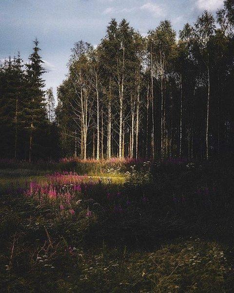 Finalist: Vakkert fargespill i skogen på Knapstad i Hobøl.