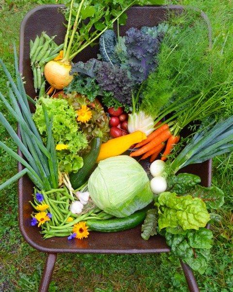 I år har andelshaverne dyrket rundt 40 ulike grønnsaker på Tutturen gård i Eidsberg. Foto: Privat