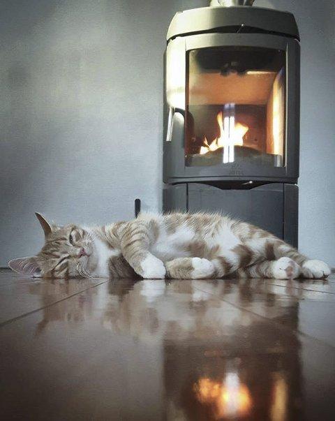 Peiskos: Katten koser seg. Foto: Anne Lise Koller