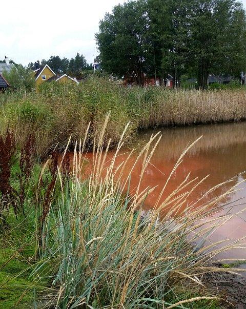 RØDT VANN: Det rustrøde vannet i Husvikkilen onsdag formiddag skyldtes rødt steinmel fra fjellboring i nærheten.