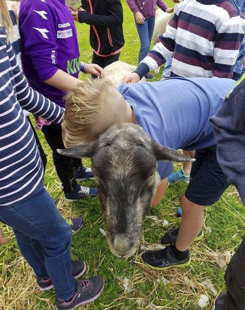 NÆRHET: er det barna søker når de hilser på alle dyra.