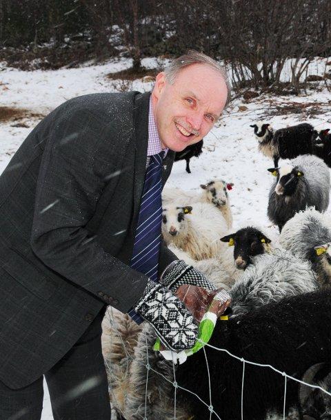 – Gråfjellkullet er neppe ulv i fåreklær. Men vi får opplyst at med god alternativ mattilgang, skal ikke ulv føre til noe stort lammetap, sier ordfører Sture Pedersen i Bø. (Arkivfoto)