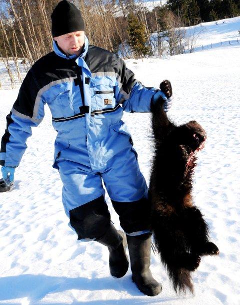 TATT I FANGSTBÅS: Hallvard Doseth, Lesjaverk, en av rovviltjegerne i Oppland som har tatt jerv i bås.