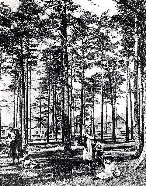 FURUMOA: Torstrands naturskapte fristed og grønne lunge, her på et bilde fra århundreskiftet.